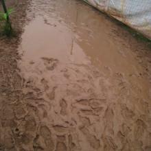 Muddy and Wet
