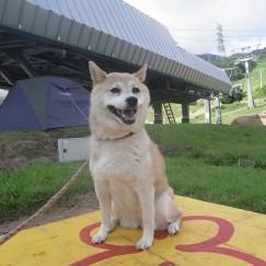 Fujidogger