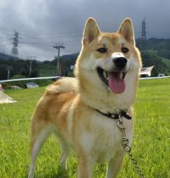未亡犬、ナナちゃん
