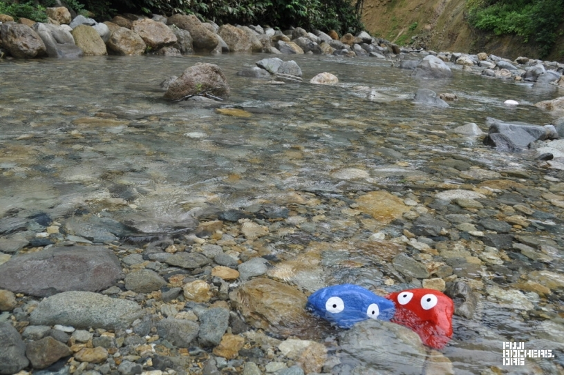 ところ天国の川で見つけたゴンちゃんたち