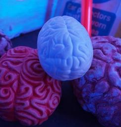 白い脳が新登場